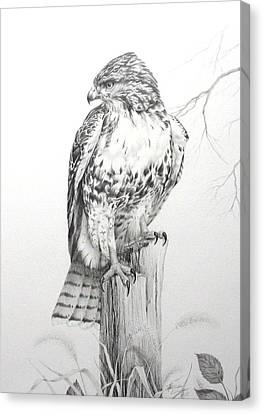 Red Tail Hawk Canvas Print by Teresa Einsig