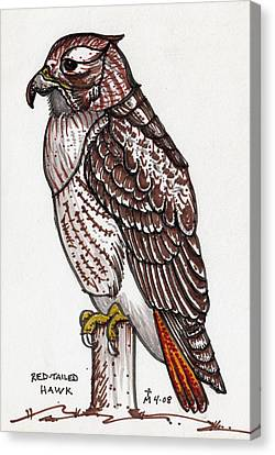 Red Tailed Hawk Canvas Print by Artreats By Tim