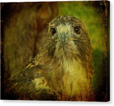 Red-tailed Hawk II Canvas Print by Sandy Keeton