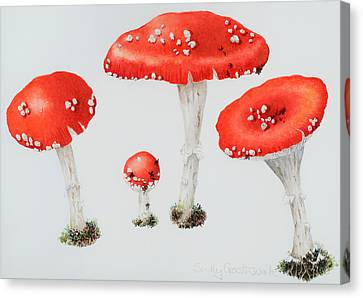 Red Toadstools Fly Agaric  Canvas Print by Sally Crosthwaite