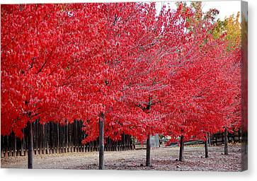 Red Tree Line Canvas Print