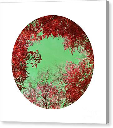 Red Trees Canvas Print by Angela Bruno