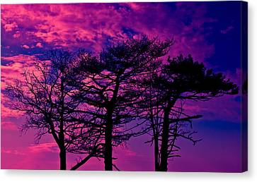 Canvas Print featuring the photograph Red Trees by David Stine