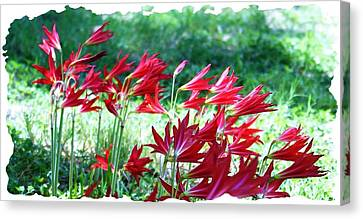 Red Trumpets Canvas Print