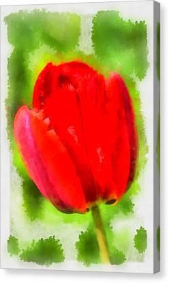 Red Tulip Aquarell Canvas Print by Matthias Hauser
