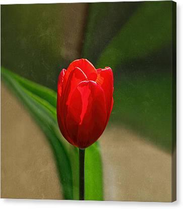 Red Tulip Spring Flower Canvas Print