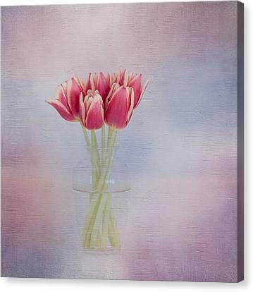 Red Tulip Still Life Canvas Print by Kim Hojnacki