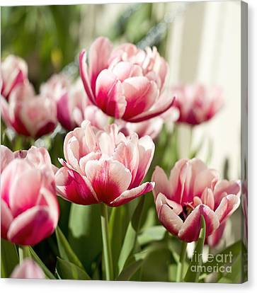 Tulip Seeds Canvas Prints Fine Art America