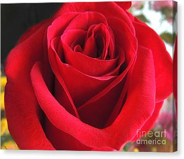 Red Velvet Canvas Print by Kristine Merc