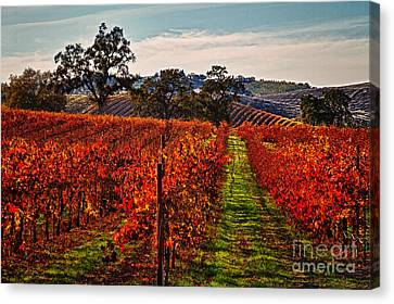 Red Vines Canvas Print by Alice Cahill