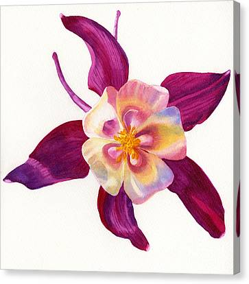Red Violet Columbine Square Design Canvas Print by Sharon Freeman