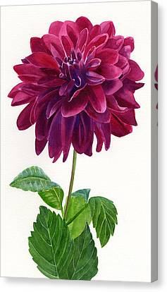 Red Violet Dahlia Blossom Canvas Print by Sharon Freeman