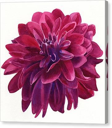 Red Violet Dahlia Square Design Canvas Print