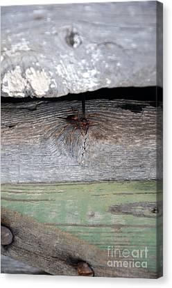 Red Wasp 2 Canvas Print by Brenda Dorman