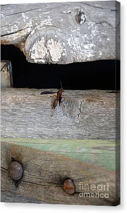 Red Wasp Canvas Print by Brenda Dorman