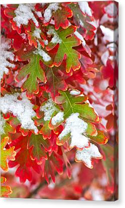 Canvas Print featuring the photograph Red White And Green by Ronda Kimbrow