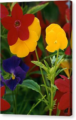 Canvas Print featuring the photograph Red Yellow Purple Flowers by Robert Lozen