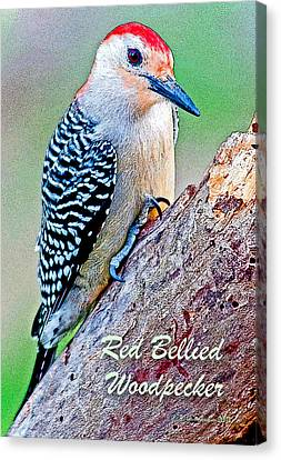 Canvas Print featuring the photograph Redbellied Woodpecker Poster Image by A Gurmankin