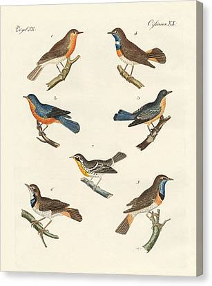 Redbreasts Bluethroats And Yellowthroats Canvas Print by Splendid Art Prints
