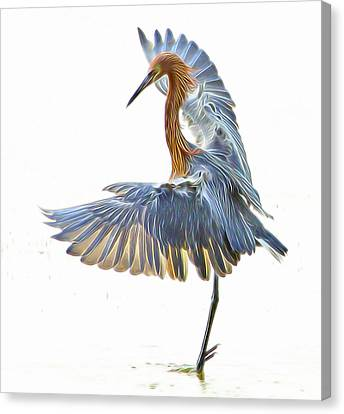 Canvas Print featuring the digital art Reddish Egret 1 by William Horden