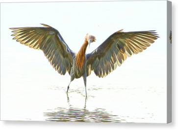 Canvas Print featuring the digital art Reddish Egret 2 by William Horden