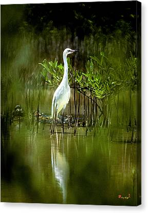 Canvas Print featuring the photograph Reddish Egret 9c by Gerry Gantt