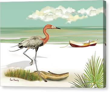 Reddish Egret Canvas Print by Anne Beverley-Stamps
