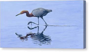 Reddish Egret Canvas Print by Kirsten Wahlquist