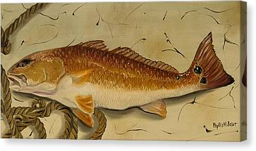 Redfish In The Boat Canvas Print by Phyllis Beiser