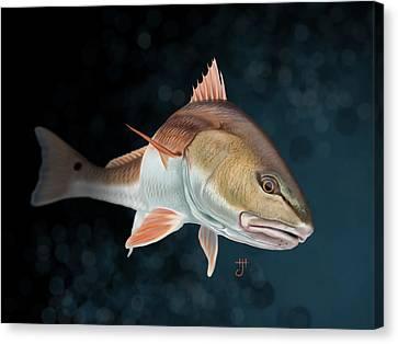 Redfish Inspection Canvas Print