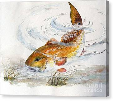 Redfish Canvas Print by Sibby S