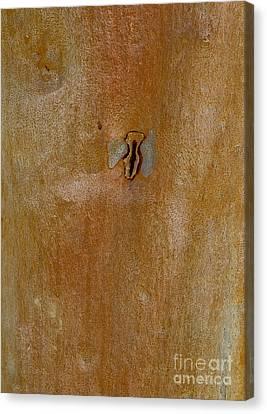 Redgum Tree Canvas Print by Steven Ralser