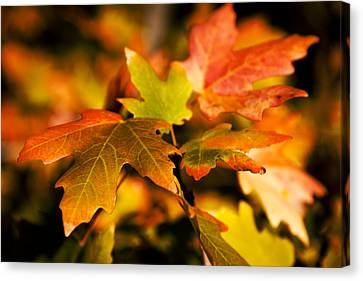 Red Leaf Canvas Print - Reds by Chad Dutson