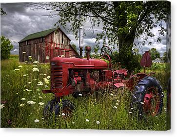 Reds In The Pasture Canvas Print by Debra and Dave Vanderlaan