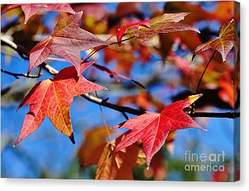 Reds Of Autumn Canvas Print