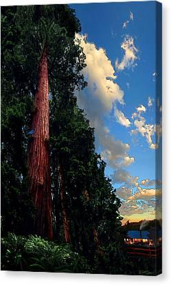 Redwood Cabin Canvas Print by Ric Soulen
