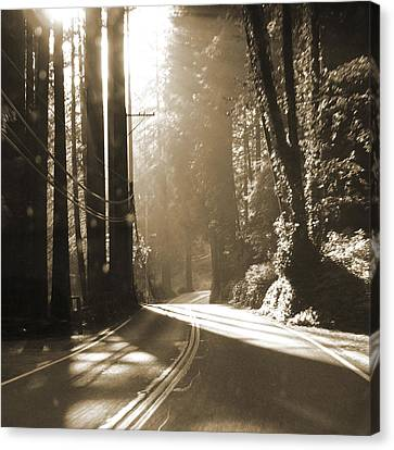 Redwood Drive Canvas Print by Mike McGlothlen