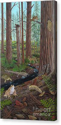 Redwood Forest Canvas Print by Carlyn Iverson
