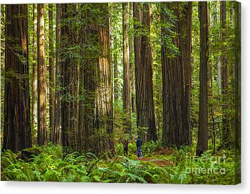 Redwood Forest Canvas Print by Diane Diederich