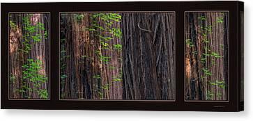 Redwood Texture Triptych Canvas Print by Leland D Howard
