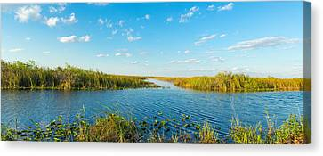 Reed At Riverside, Big Cypress Swamp Canvas Print by Panoramic Images