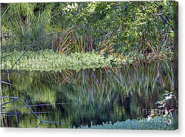 Canvas Print featuring the photograph Reed Reflections by Kate Brown