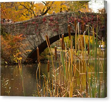 Canvas Print featuring the photograph Reeds And Gapstow Bridge by Jose Oquendo