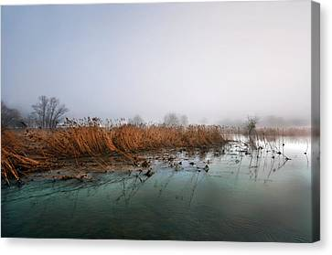 Canvas Print featuring the photograph Reeds by Graham Hawcroft pixsellpix