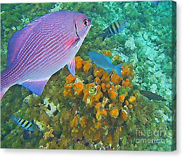 Reef Life Canvas Print