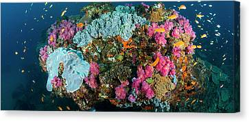 Reef Outcrop Encrusted With Colorful Canvas Print