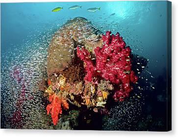 Reef Scenics, Raja Ampat Islands, Irian Canvas Print by Jaynes Gallery