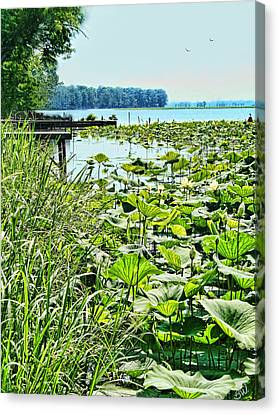 Reelfoot Lake Lilly Pads Canvas Print by Bonnie Willis