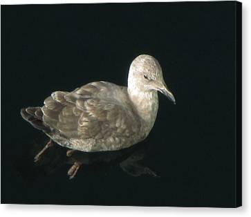 Refections Of A Gull Canvas Print by Jennifer Wheatley Wolf