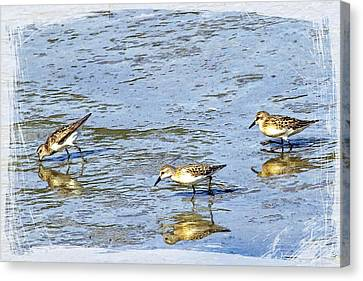 Reflecting Sandpipers Canvas Print